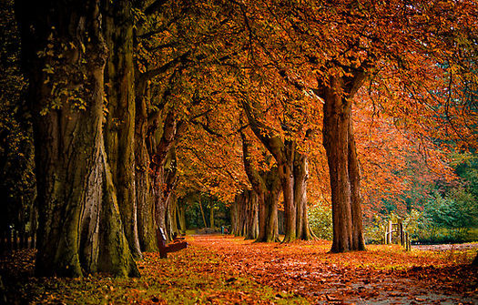 september-autumn-thumb-525x335-22785
